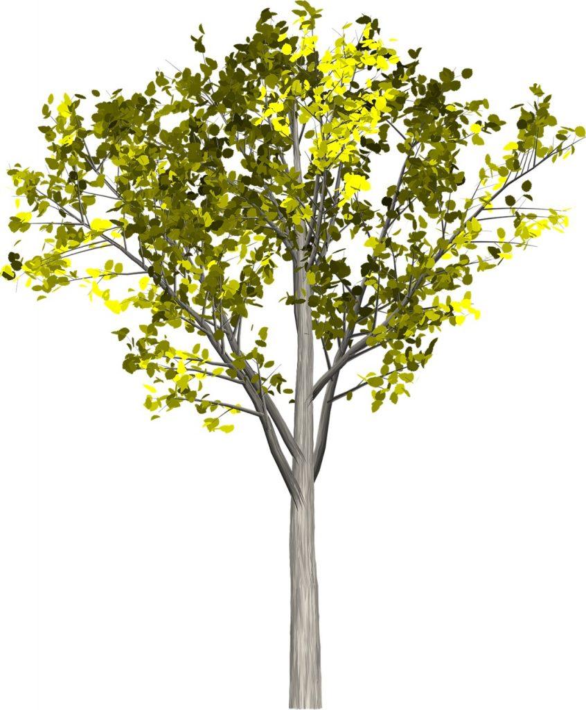 tree-1638413_1280