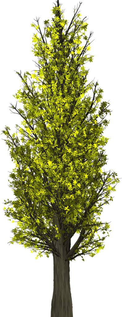tree-1658808_1280