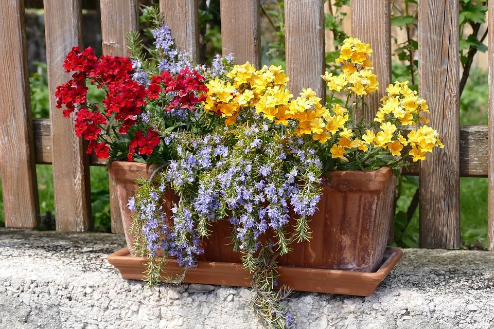 flowers-1322090_960_720