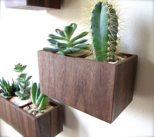 Walnut-wood-wall-planters-can-be-crafted-at-home