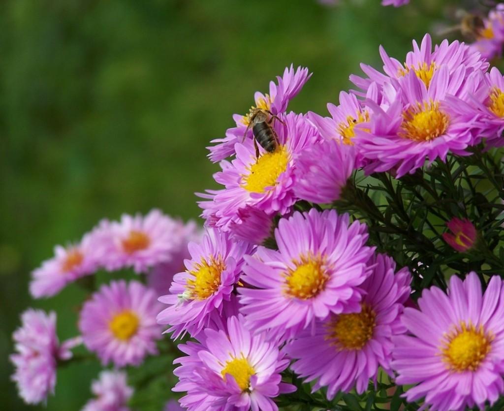 Цветы осенью картинки 3