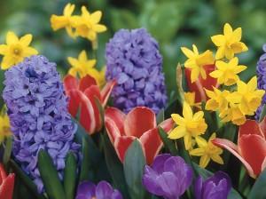 gradina colorata, flori de toate culorile