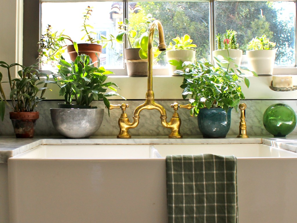 Plante potrivite pentru bucatarie casa i gr dina for Plante x ragnarok