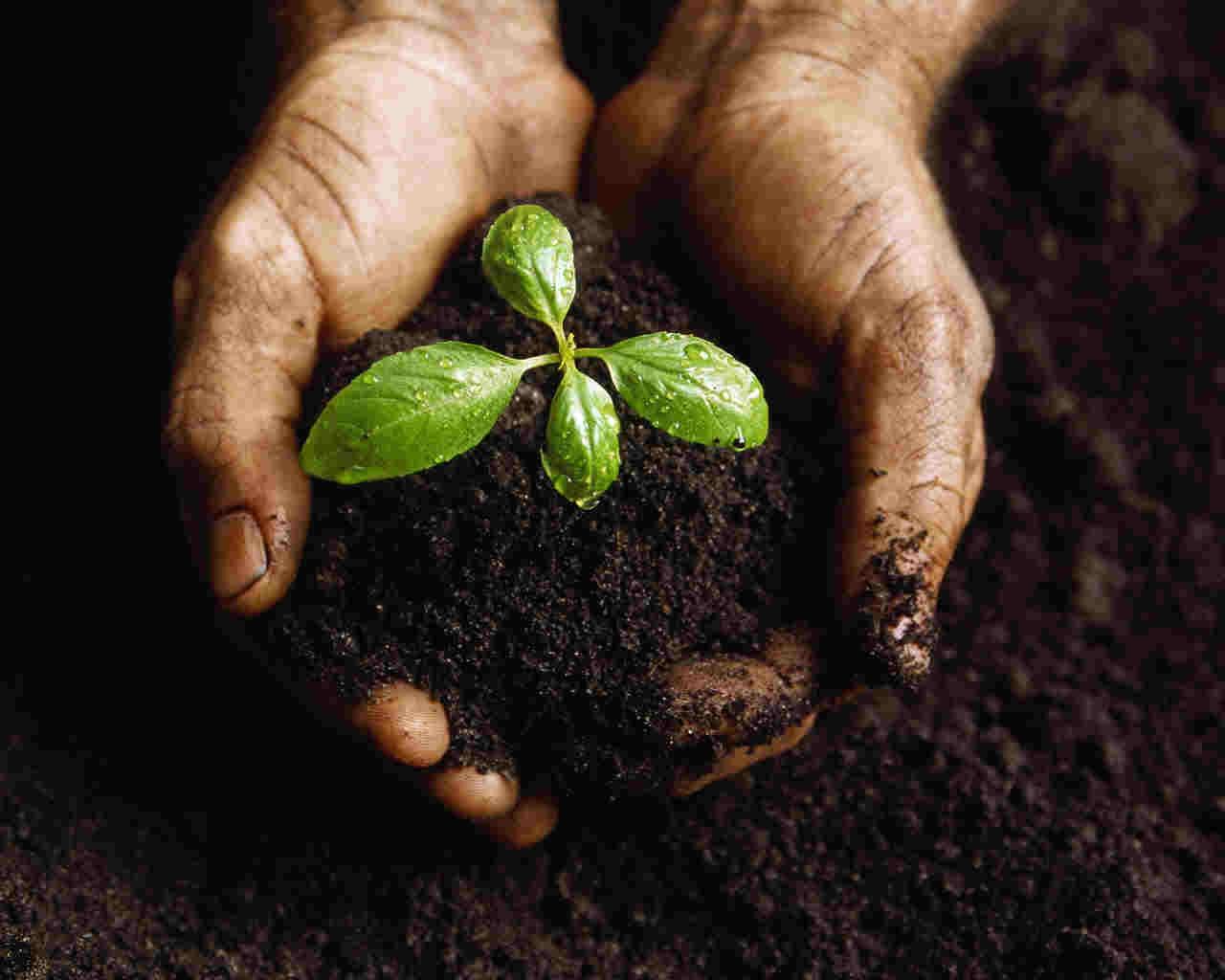 Fertilizatori naturali si ingrasaminte ecologice pentru gradina ta