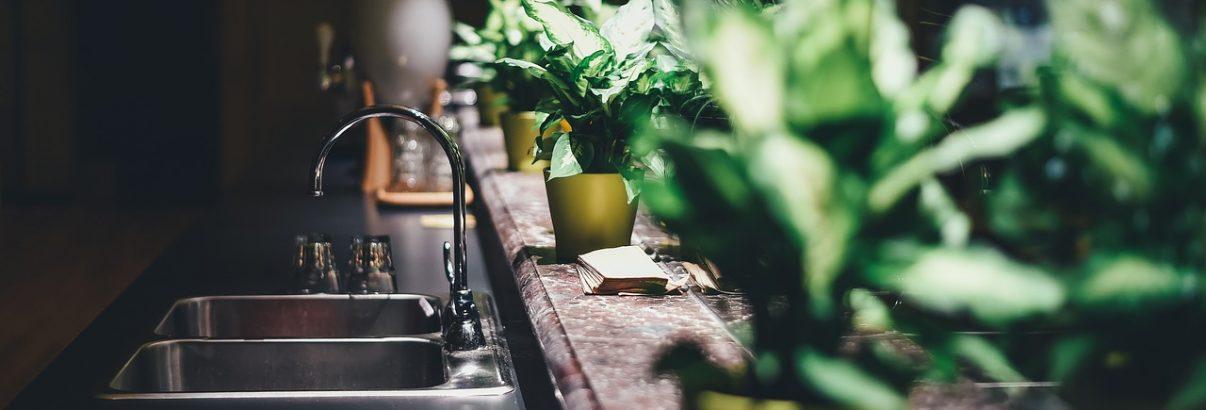 Plante care rezista fara lumina