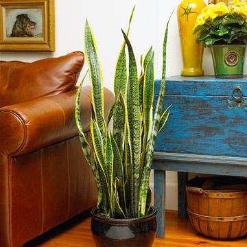 Pozitia corecta a plantelor din casa (2)