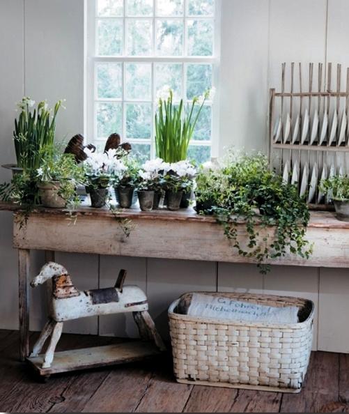 Pozitia corecta a plantelor din casa (3)