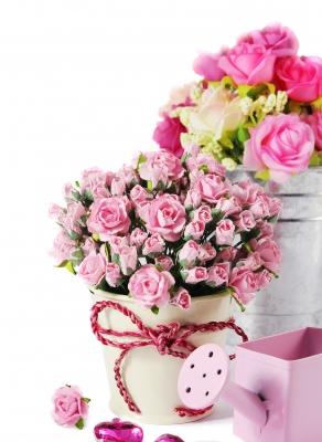 Trandafirii pitici (6)