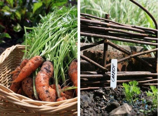 luna mai in gradina de legume (2)