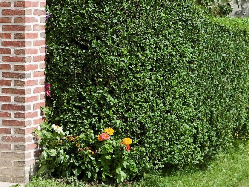 Cei mai frumosi arbori si arbusti ornamentali casa i for Arbusti ornamentali