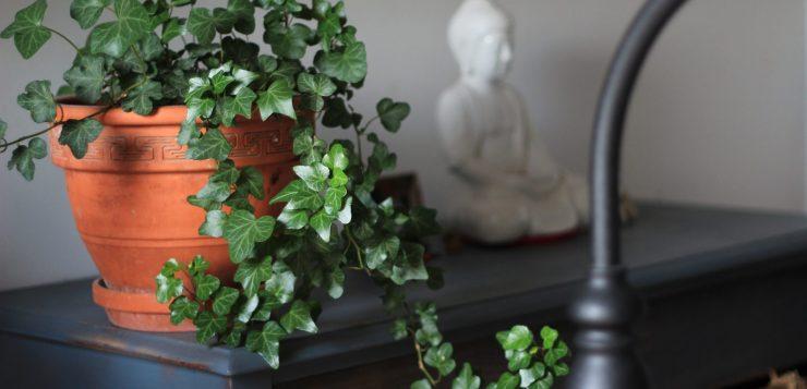 ghiveci cu flori, cele mai iubite plante