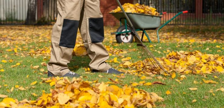 pune frunzele uscate la treaba