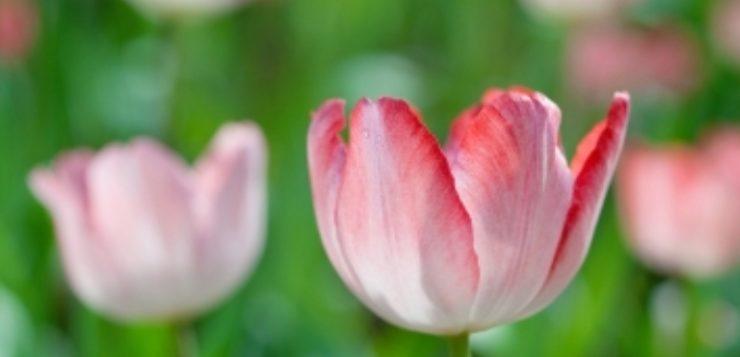 Plante perene de gradina flori cu viata lunga casa i for Plante x ragnarok