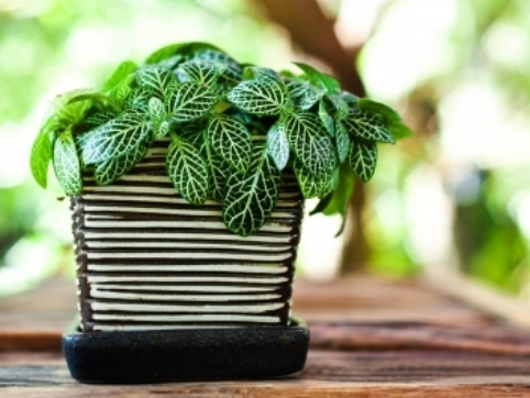 Plante De Apartament Care Purifica Aerul Casa și Grădina