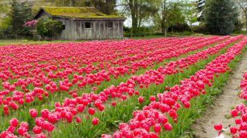 drumul florilor, pepiniera