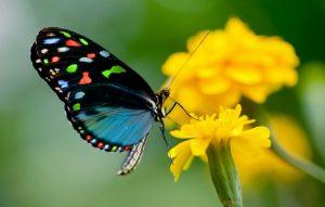 tipul florilor - intens colorate
