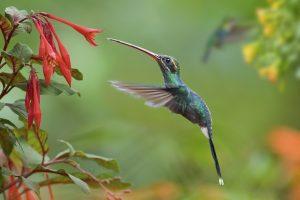 tipul florilor - polenizare prin păsări