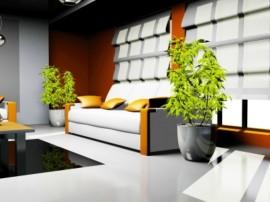top 10 plante Feng Shui de interior (4)