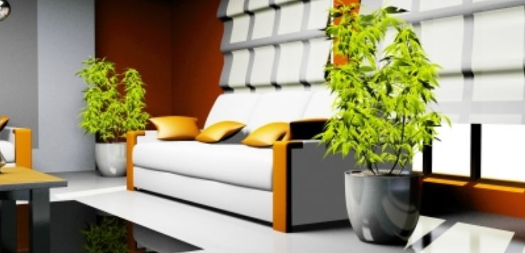 top 10 plante feng shui de interior casa i gr dina. Black Bedroom Furniture Sets. Home Design Ideas