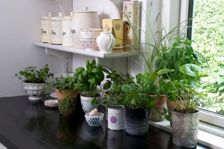 Top 10 plante feng shui de interior casa i gr dina for Plante de interior