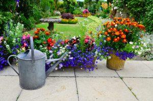 Florile verii