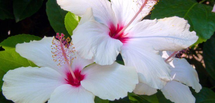 pământul de flori