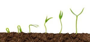 Plante obținute din semințe