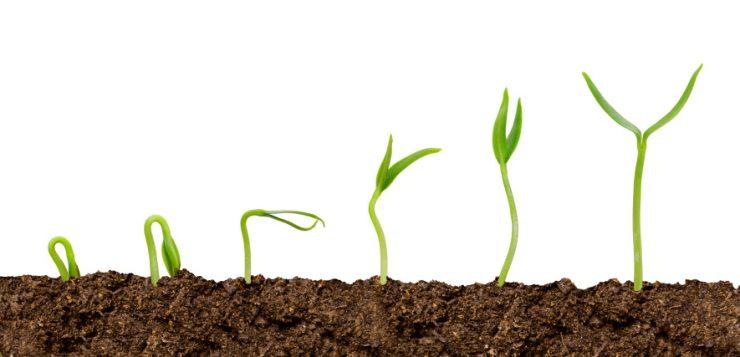 Plante ob inute din semin e e foarte simplu casa i for Plante x ragnarok