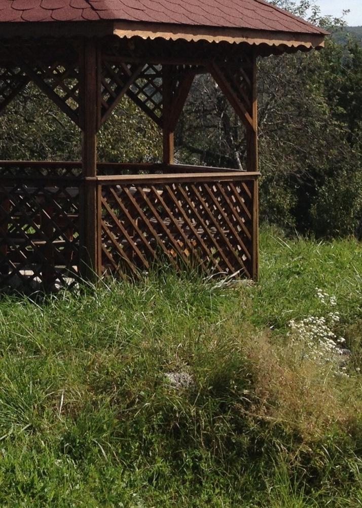 Solutii naturale practice pentru a scapa de papiloame