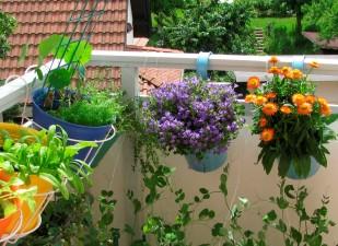 balconul cu flori
