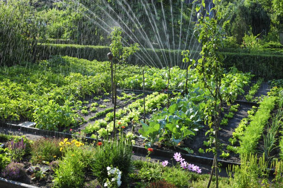 огродные работы в мае - распыление воды для защиты от морозов