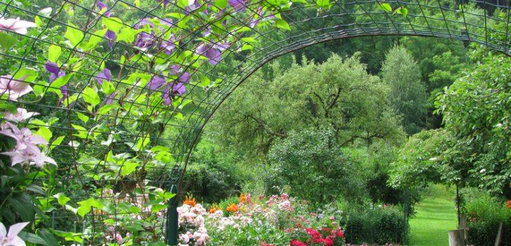 flori urcătoare trandafiri clematite glicina