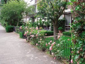 gard trandafiri pitici loc mic