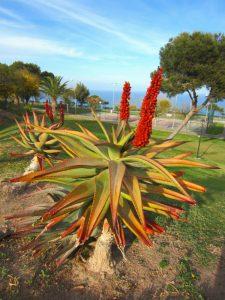 Trei plante iubitoare de secetă