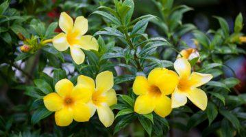 Flori tropicale în grădina ta