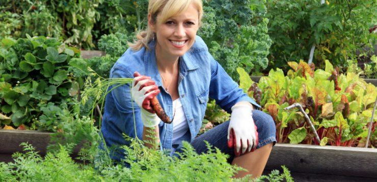 Rotaţia culturilor legumicole