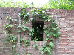 loc primitor plante cataratoare zid caramida