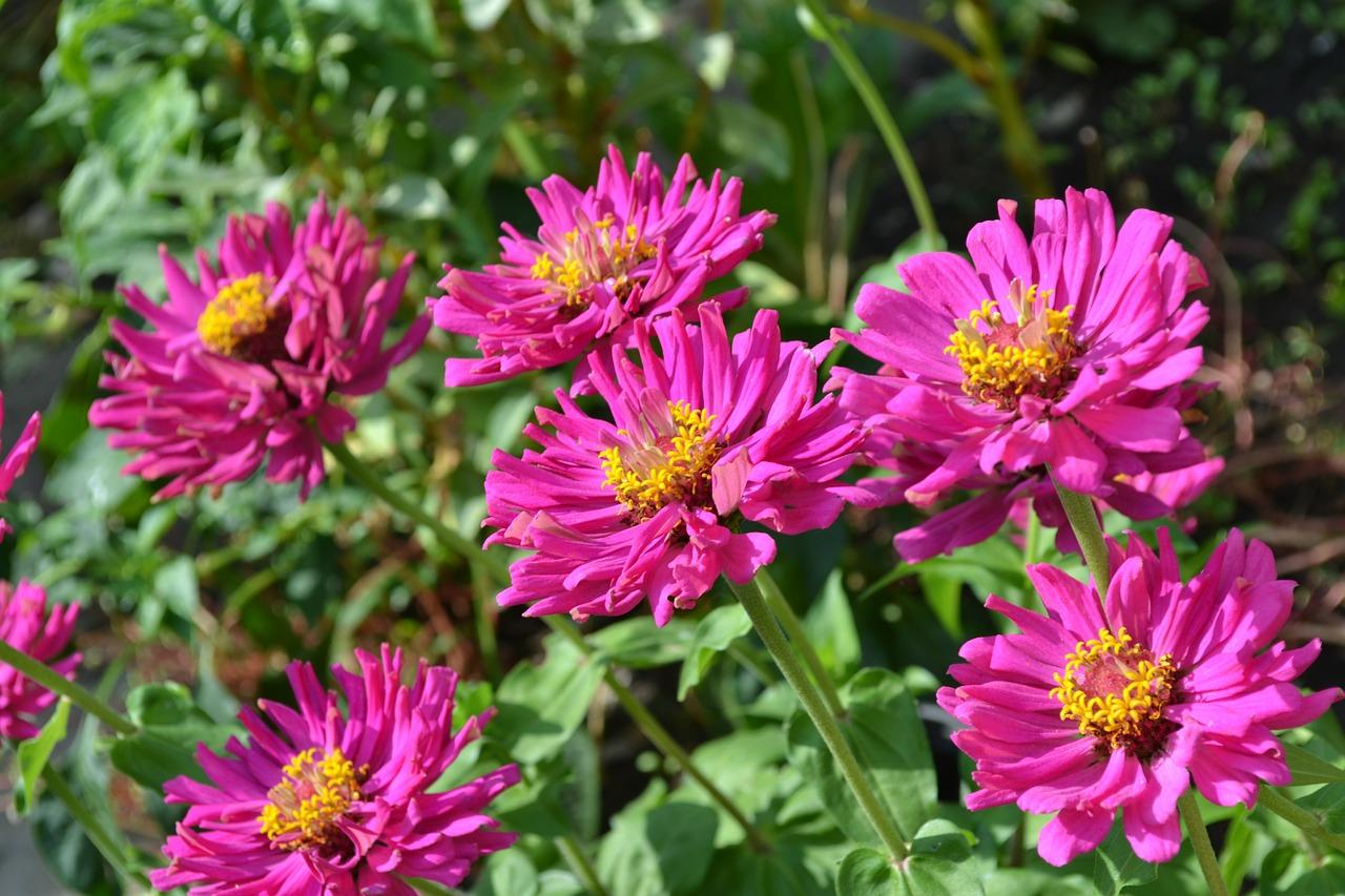 Florile De Vară Toamnă Florile Sfarsitului De Vara