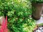 legume si mirodenii salata patrunjel cret rozmarin