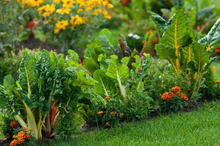 plante gradina eco