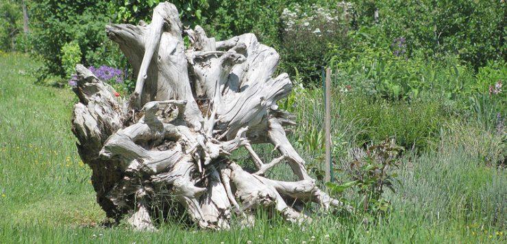 puncte de interes radacina de arbore