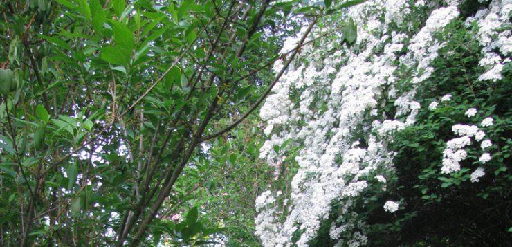 peisaje montane rododendron