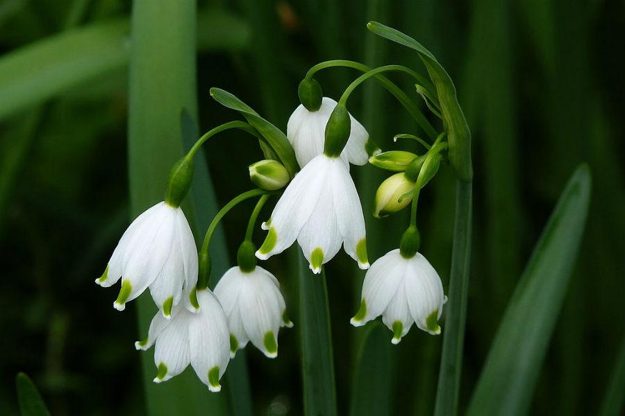 5 Flori De Primăvară Iți Transformă Grădina In Rai Casa și Grădina