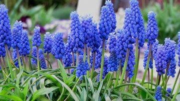 Flori de primăvară