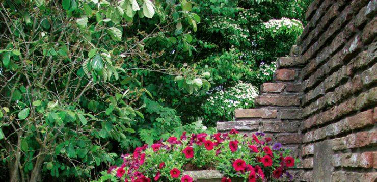 ghivece cu flori cupa din piatra