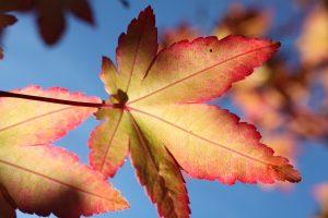 frunze uscate, toamana, frunza colorata in galben