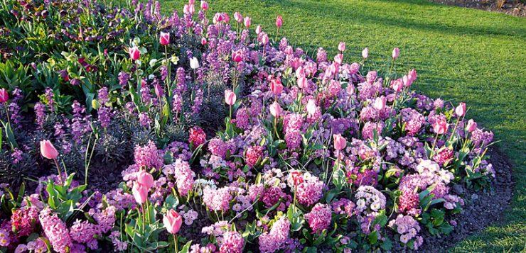 aranjamente armonioase flori mov si roz