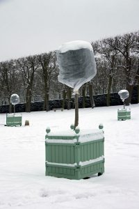 metode de protecție a plantelor pe timpul iernii