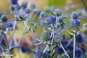 Plante medicinale și curiozitățile lor