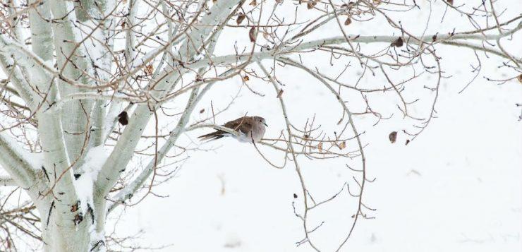 Îngrijirea arborilor și arbuștilor la final de iarnă